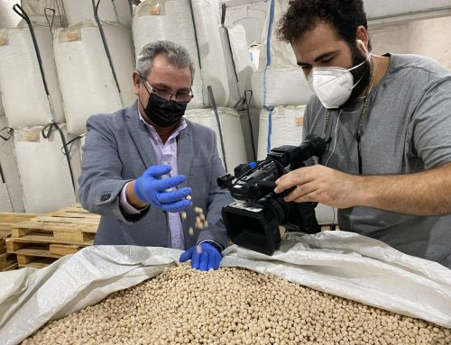La producción de garbanzos de la IGP 'Garbanzo de Escacena' roza el millón de kilogramos y supera las previsiones tras una primavera seca
